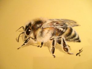 Honey Bee (Winner of the National Bees in Art competition 2017) (SOLD)