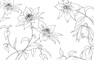 Blossom flowers line drawing homeware artwork