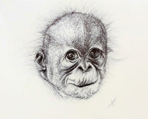 "Orangutan ink drawing for ""Forgotten Planet"" poetry anthology (Falmouth University publication)"