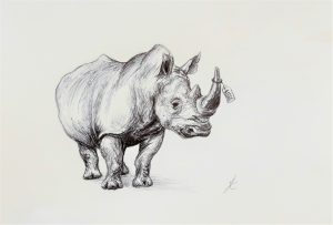 "Rhinocerous ink drawing for ""Forgotten Planet"" poetry anthology (Falmouth University publication)"